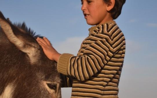 Un burro para Mamma Addi