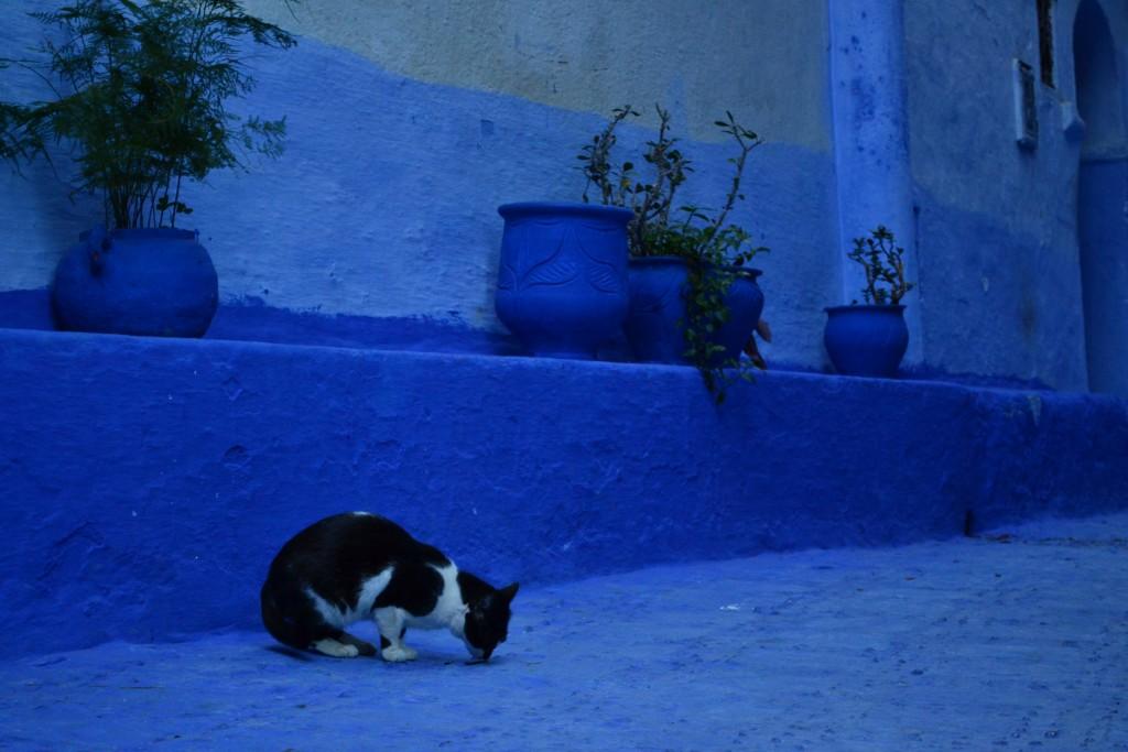 gatos de Chaouen