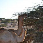 Viajar a Mauritania: consejos e información útil.