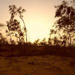 Lompoul: un desierto con olor a mar