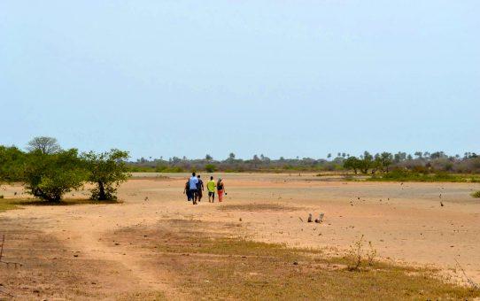Gambia, visita express | El jardin de los artistas y primeras lluvias en Kartong