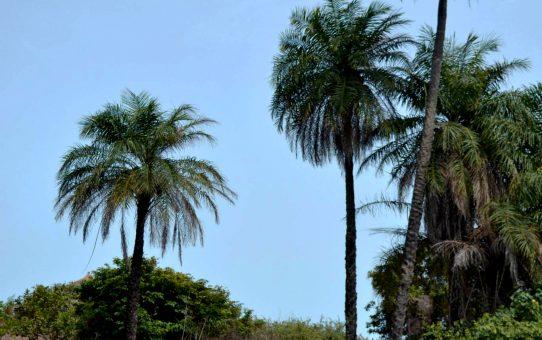 Los días tranquilos de Abéné