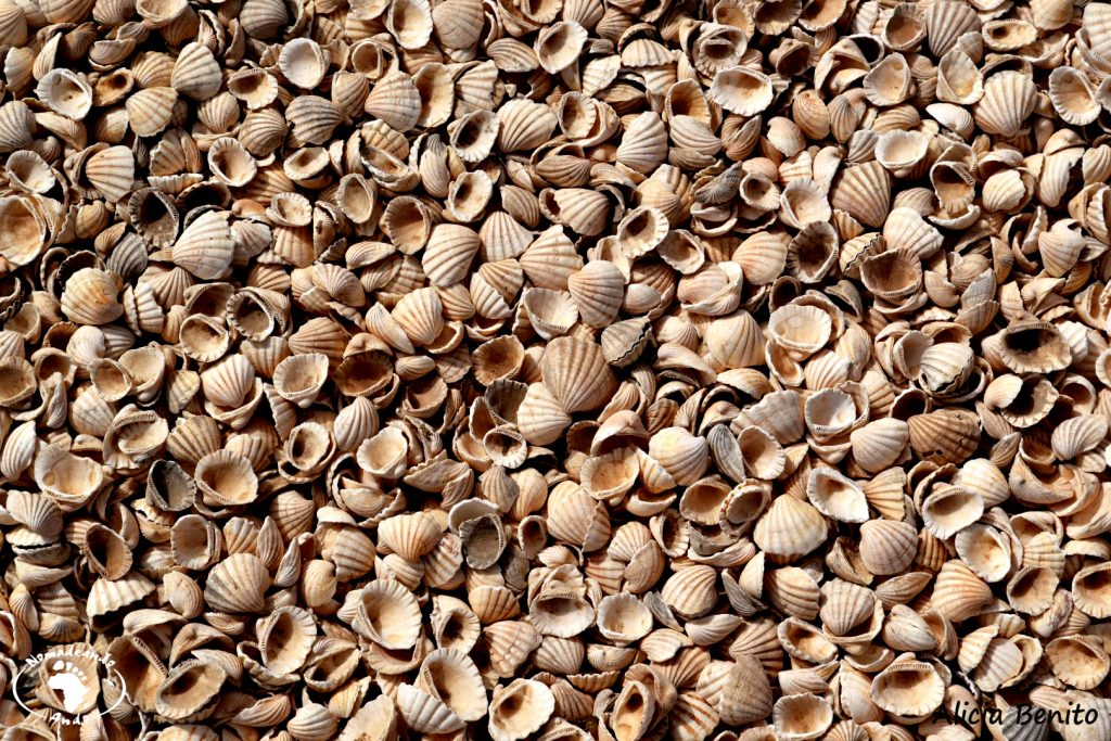 Joal-Fadiouth. Senegal