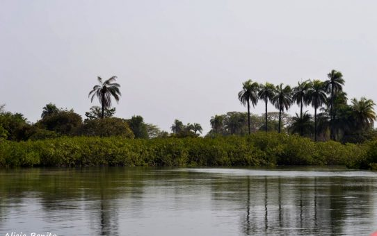 Dionewar y el Delta de Saloum  || La puerta del paraiso huele a pescado podrido